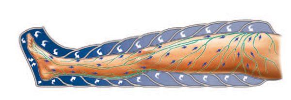 lymph drainage diagram